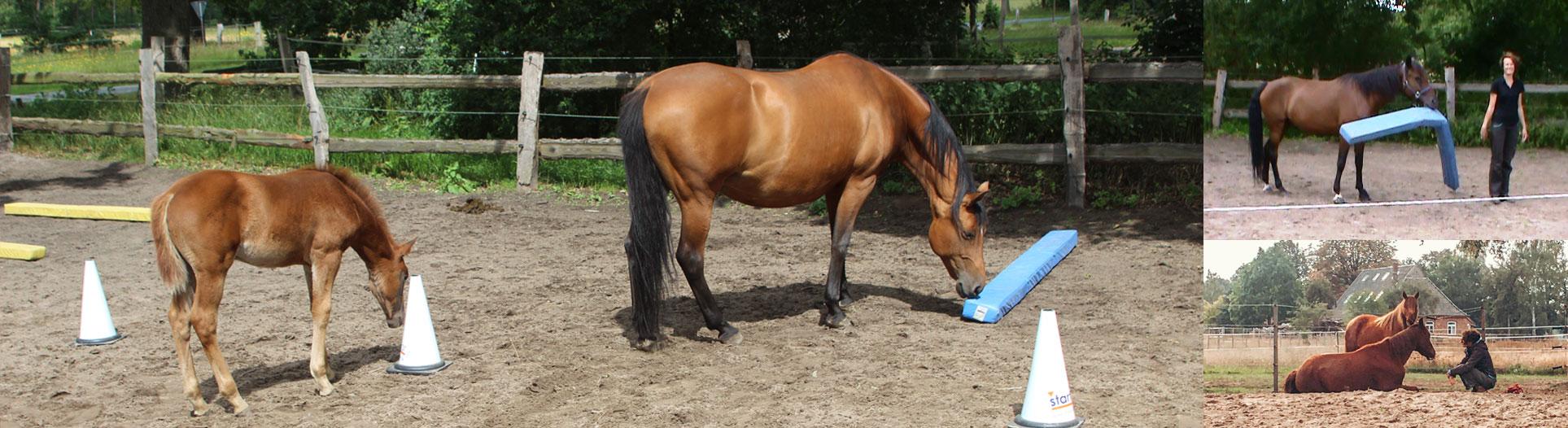 Header-PersoenlichkeitsentwPferd_2